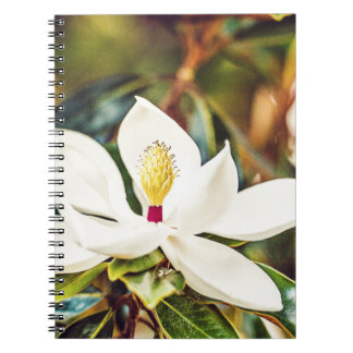 Gorgeous Mississippi Magnolia Notebook
