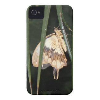 Gorgeous Moth Blackberry Bold Case