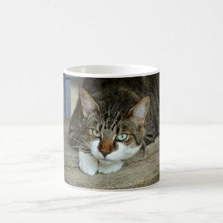 Gorgeous Mysterious Cat Mug