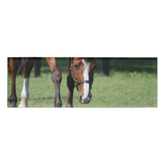 Gorgeous Quarter Horse Name Tag