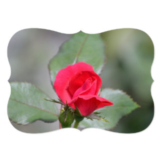 "Gorgeous Red Rose Bud 5"" X 7"" Invitation Card"