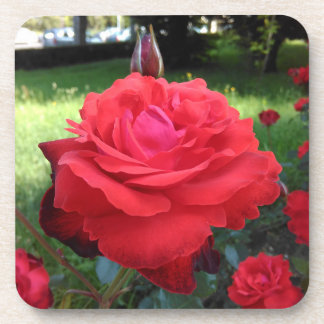 Gorgeous Red Roses Coaster