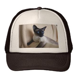 Gorgeous Siamese Cat Face Cap