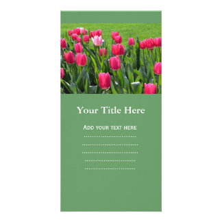 gorgeous spring pink tulip flowers custom photo card