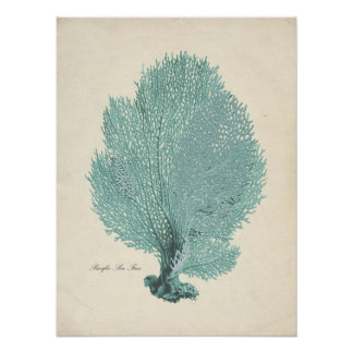 Gorgeous Turquoise/Aqua Pacific Sea Fan Poster