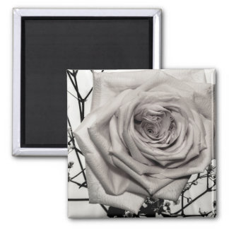 Gorgeous White Rose Square Magnet
