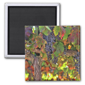 Gorgeous Wine Country Harvest Magnet