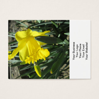 Gorgeous Yellow Daffodils Business Card