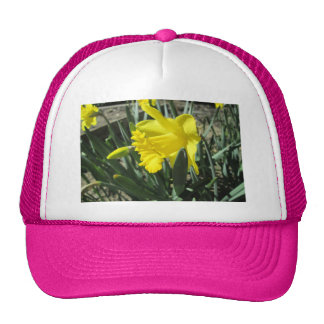 Gorgeous Yellow Daffodils Cap