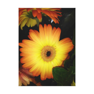 Gorgeous Yellow Gerbera Daisy Close-up Canvas Print