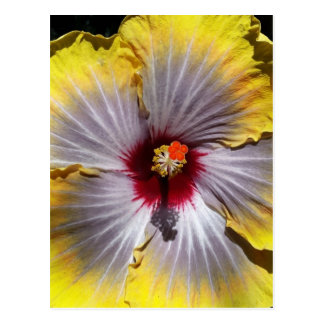 Gorgeous Yellow Hibiscus Flower Design Postcard
