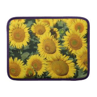 "Gorgeous Yellow Sunflowers 13"" Macbook Air Sleeve"
