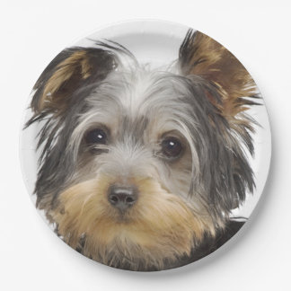 Gorgeous Yorkshire Terrier Paper Plate