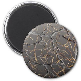Gorgonian coral magnet