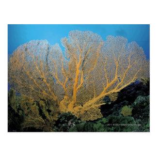 Gorgonian coral postcard