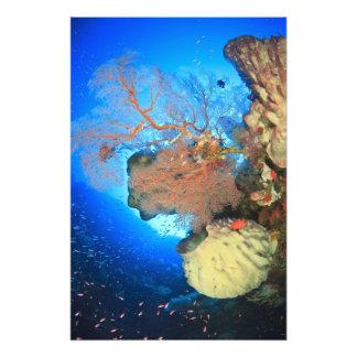 Gorgonian sea fans, Gunung Api Island, Banda Photo Print