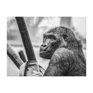 Gorilla - Black and White Photograph Canvas Print