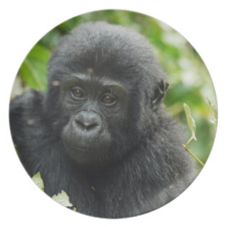 Gorilla child as plates