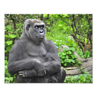 Gorilla Monsoon Photograph