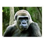 Gorilla Profile Postcard
