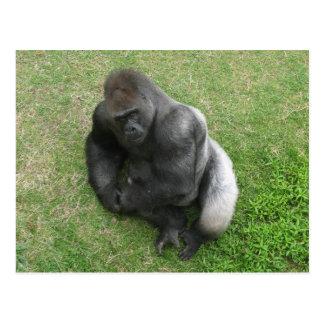 Gorilla Stare Postcard