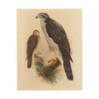 Goshawk John Gould Birds of Great Britain Wildlife Wood Canvas