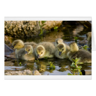 Goslings Card