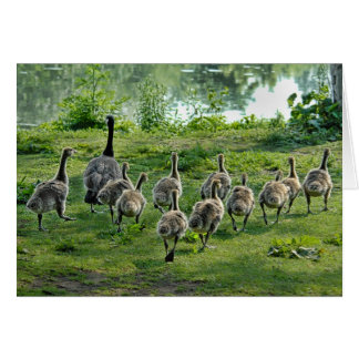 Goslings March Greeting Card