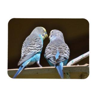 Gossiping Budgies Magnet