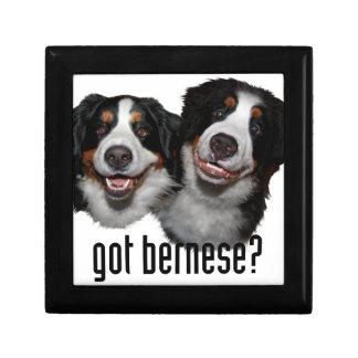 got bernese? gift box