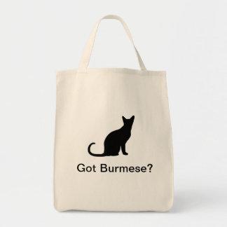 Got Burmese cat