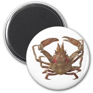 Got Crabs? nice sea crab-dinner time Fridge Magnets