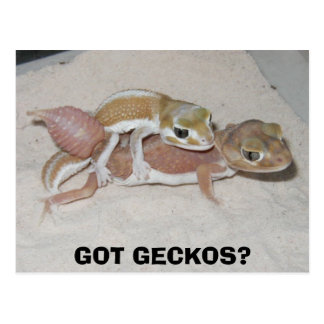 GOT GECKOS? POSTCARD