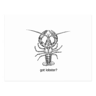 got lobster? postcard