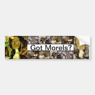 Got Morels? Mushrooms Bumper Sticker