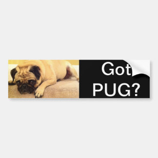 Got pug dog bumper sticker