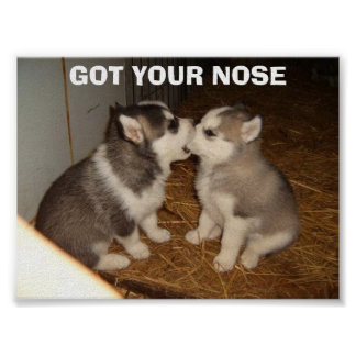 GOT YOUR NOSE POSTER