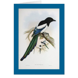 Gould - Afghan Magpie Card