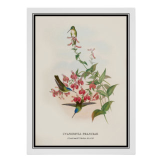 Gould and Richter, Vintage Hummingbird Poster