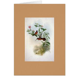 Gould - Dohrn's Hermit Hummingbird Card