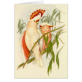 Gould - Leadbetter's Cockatoo Card