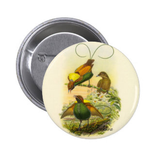 Gould - Magnificent Bird Of Paradise Promo Button