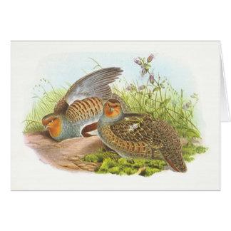 Gould - Partridge - Perdix perdix Card