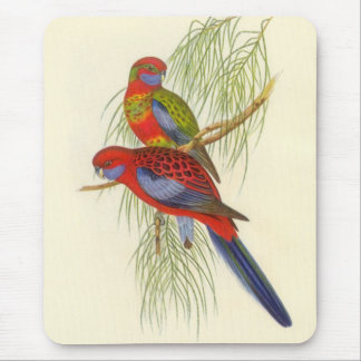Gould - Pennant's Parakeet Mouse Pad