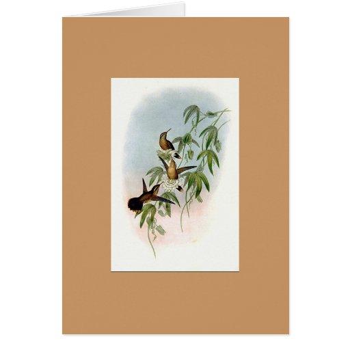 Gould - Purple-Throated Adelomyia Hummingbird Card