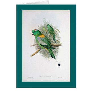Gould - Racket-Tailed Parrot Card