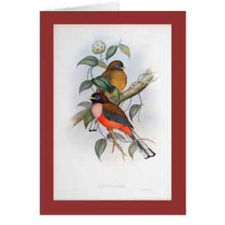 Gould - Rosy-Breasted Trogon Card