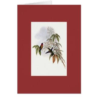 Gould - Ruby-Throated Hummingbird Card