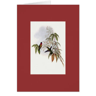 Gould - Ruby-Throated Hummingbird Greeting Card