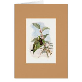 Gould - Snowy-Throated Emerald Hummingbird Card